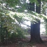 Denkmal Heinrichseck im Tharandter Wald