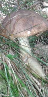 Pilze am Judeichweg