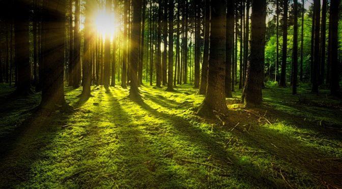 Wanderung zu Cottas Grab und Judeichgrab im Tharandter Wald bei Dresden